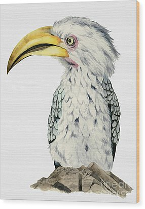 Yellow-billed Hornbill Watercolor Painting Wood Print by NamiBear
