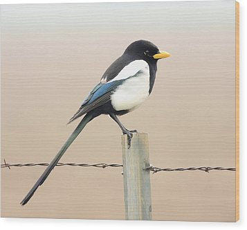 Yellow-billed Magpie Wood Print by Wingsdomain Art and Photography