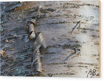 Wood Print featuring the photograph Yellow Birch Details by Andrew Pacheco