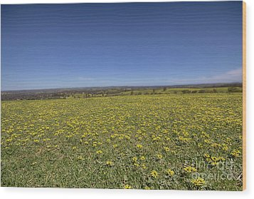 Wood Print featuring the photograph Yellow Blanket II by Douglas Barnard