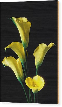 Yellow Calla Lilies  Wood Print by Garry Gay