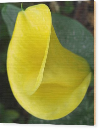 Wood Print featuring the photograph Yellow Calla Lily by Frederic Kohli