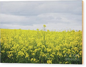 Wood Print featuring the photograph Yellow Canopies by Ivy Ho