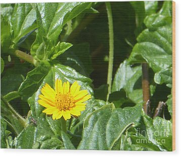 Yellow Caribbean Flower Wood Print by Margaret Brooks