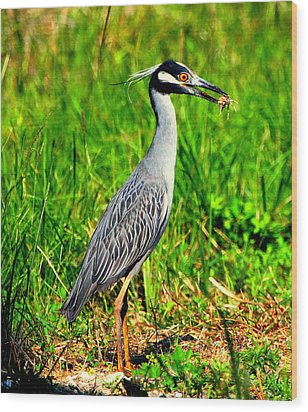Wood Print featuring the photograph Yellow Crested Night Heron Catches A Fiddler Crab by Barbara Bowen