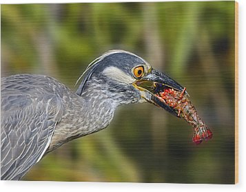 Yellow Crowned Night Heron Goes Crawfishing Wood Print by Bonnie Barry