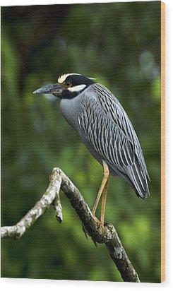 Yellow-crowned Night Heron Wood Print by JP Lawrence