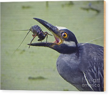 Wood Print featuring the photograph Yellow Crowned Night Heron  by Savannah Gibbs