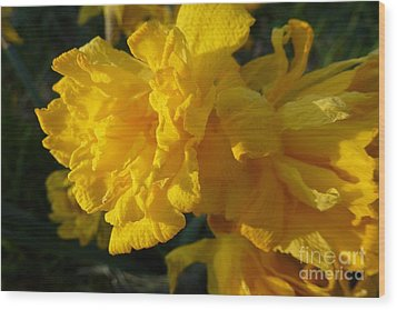 Yellow Daffodils Wood Print by Jean Bernard Roussilhe
