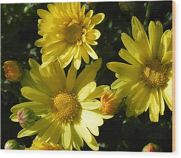 Yellow Daisies Wood Print by John Parry