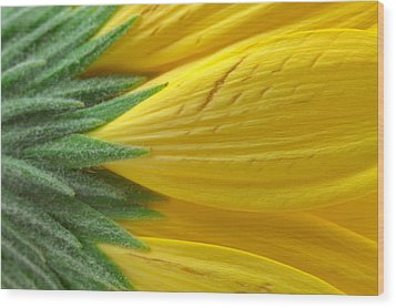 Yellow Daisy Macro Wood Print