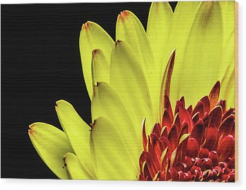 Yellow Daisy Peeking Wood Print