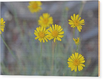 Yellow Daisy Wildflowers Wood Print