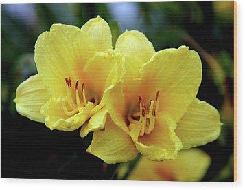 Yellow Daylilly 0204 H_2 Wood Print
