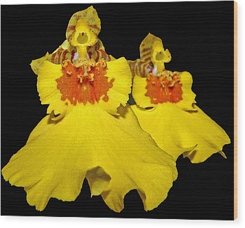 Wood Print featuring the photograph Yellow Dresses by Judy Vincent