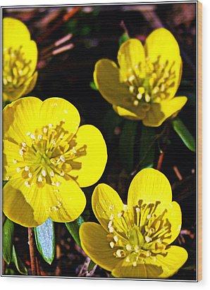 Yellow Wood Print by Elizabeth Babler