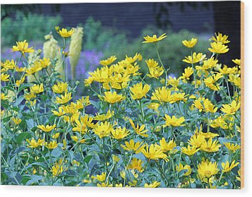 Yellow Everywhere Wood Print by Becky Lodes