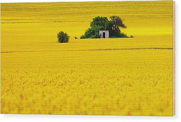 Yellow Wood Print by Evgeni Dinev