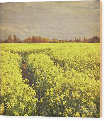 Yellow Field Wood Print by Lyn Randle