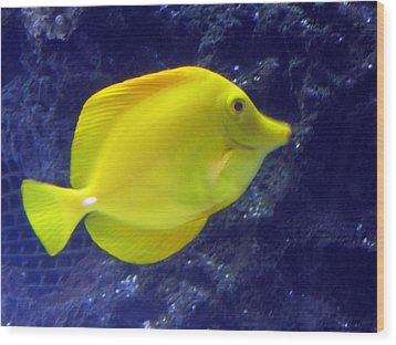 Wood Print featuring the relief Yellow Fish by Suhas Tavkar