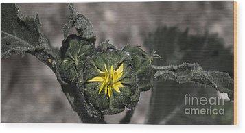 Yellow Flower 3 Wood Print