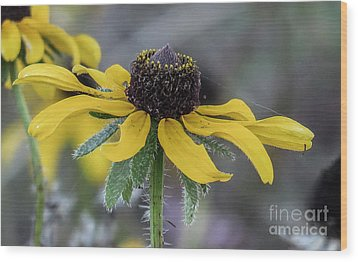 Yellow Flower 6 Wood Print