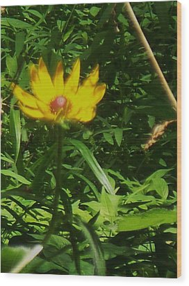 Yellow Flower Wood Print by Eric  Schiabor