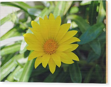 Yellow Flower Wood Print by Isam Awad