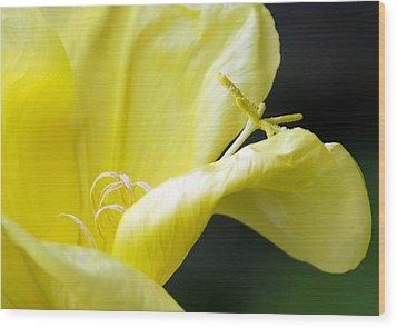 Yellow Flower Wood Print by Svetlana Sewell