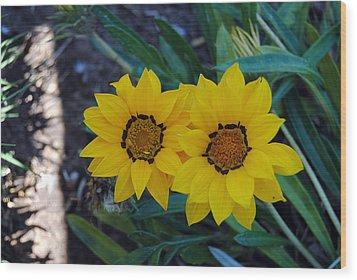 Gazania Rigens - Treasure Flower Wood Print by Isam Awad