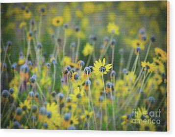 Wood Print featuring the photograph Yellow Flowers by Kelly Wade