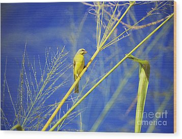 Yellow Fronted Canary Wood Print by Bob Abraham - Printscapes