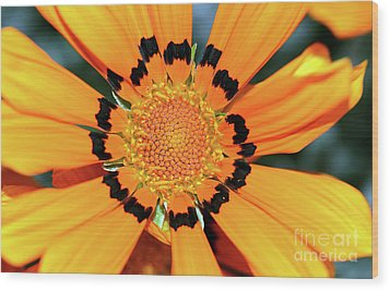 Wood Print featuring the photograph Yellow Gazania By Kaye Menner by Kaye Menner