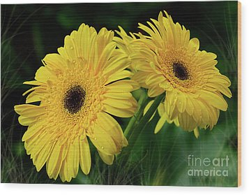 Wood Print featuring the photograph Yellow Gerbera Daisies By Kaye Menner by Kaye Menner