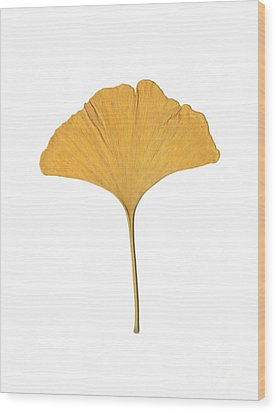 Yellow Ginkgo Leaf Wood Print