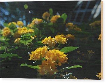 Yellow Girls Wood Print