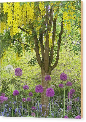 Yellow Hanging Hydrangea Tree Wood Print by Elizabeth Thomas