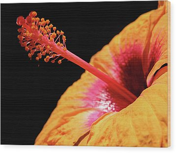 Wood Print featuring the photograph Yellow Hibiscus by Marie Hicks