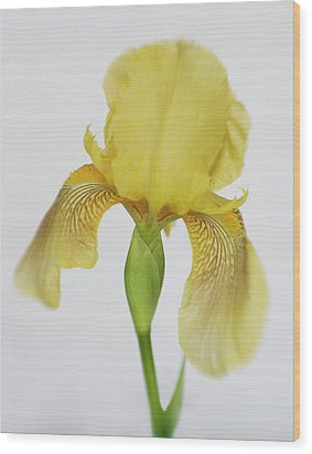 Wood Print featuring the photograph Yellow Iris A Symbol Of Passion by David and Carol Kelly