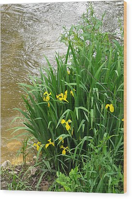 Yellow Iris Wood Print by Anna Villarreal Garbis