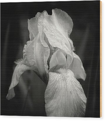 Yellow Iris In Black And White Wood Print by Chrystal Mimbs