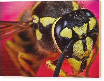 Yellow Jacket Wood Print by Ryan Kelly