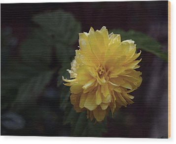 Wood Print featuring the photograph Yellow by Keith Elliott