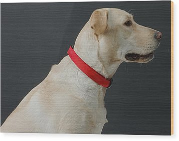 Yellow Lab Wood Print by Jerry McElroy