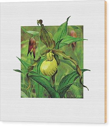 Yellow Lady Slipper Wood Print by JQ Licensing