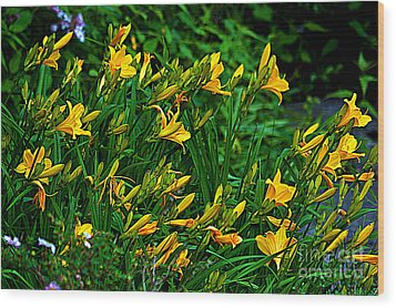 Wood Print featuring the photograph Yellow Lily Flowers by Susanne Van Hulst