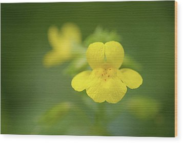 Wood Print featuring the photograph Yellow Monkey Flower by Alexander Kunz