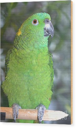 Wood Print featuring the photograph Yellow-naped Amazon by Debbie Stahre