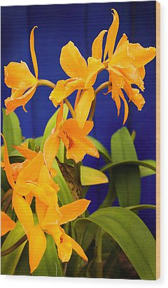 yellow Orange Orchids Wood Print by Stephen Mack