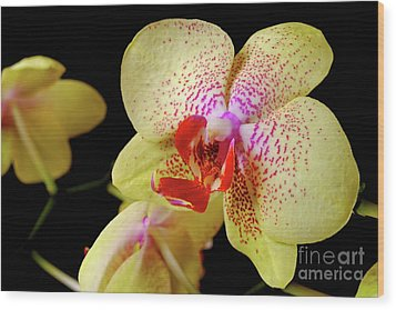 Wood Print featuring the photograph Yellow Phalaenopsis Orchid by Dariusz Gudowicz
